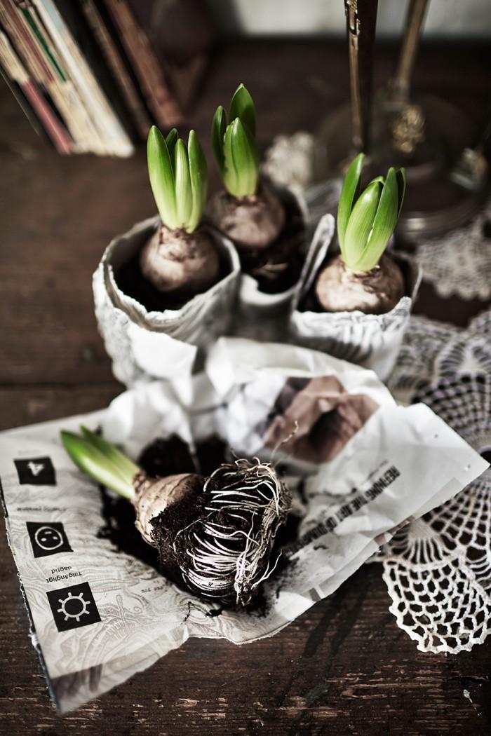 vinterfest_hyacinter