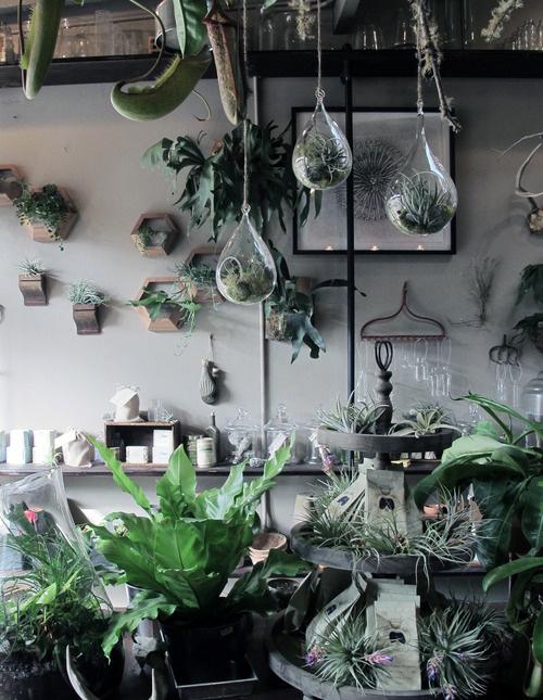 22. terra-plants