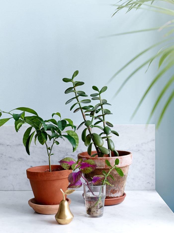växter som inte behöver så mycket ljus