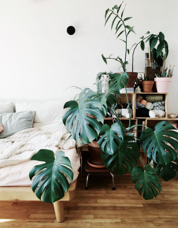 snygga växter inomhus
