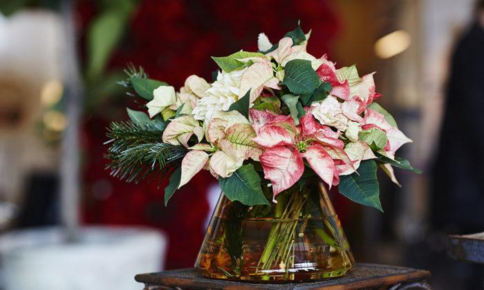 julstjarna-dekorera-snittblomma-