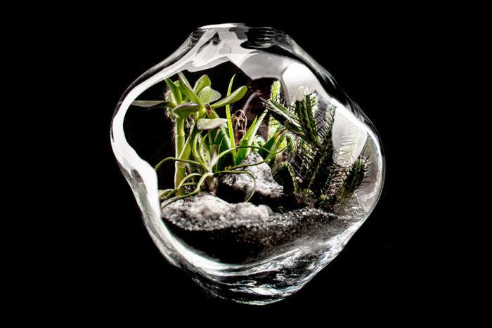 Plantera dina växter i ett terrarium.