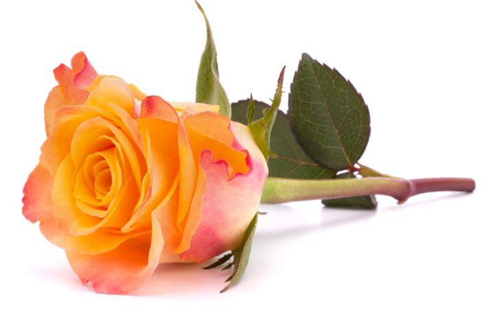 färg på rosor betydelse