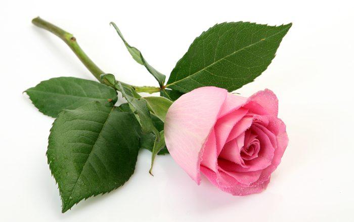 rosa-ros-betydelse