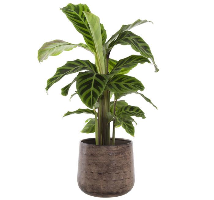 lättskötta växter inomhus