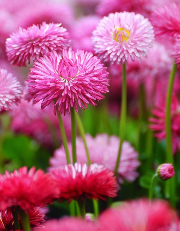 blommor på a
