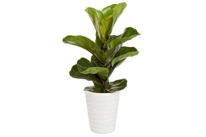 populära växter 2018