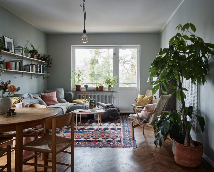 Livingroom with grey painted walls, colourful rug and green plants and indoor trees.