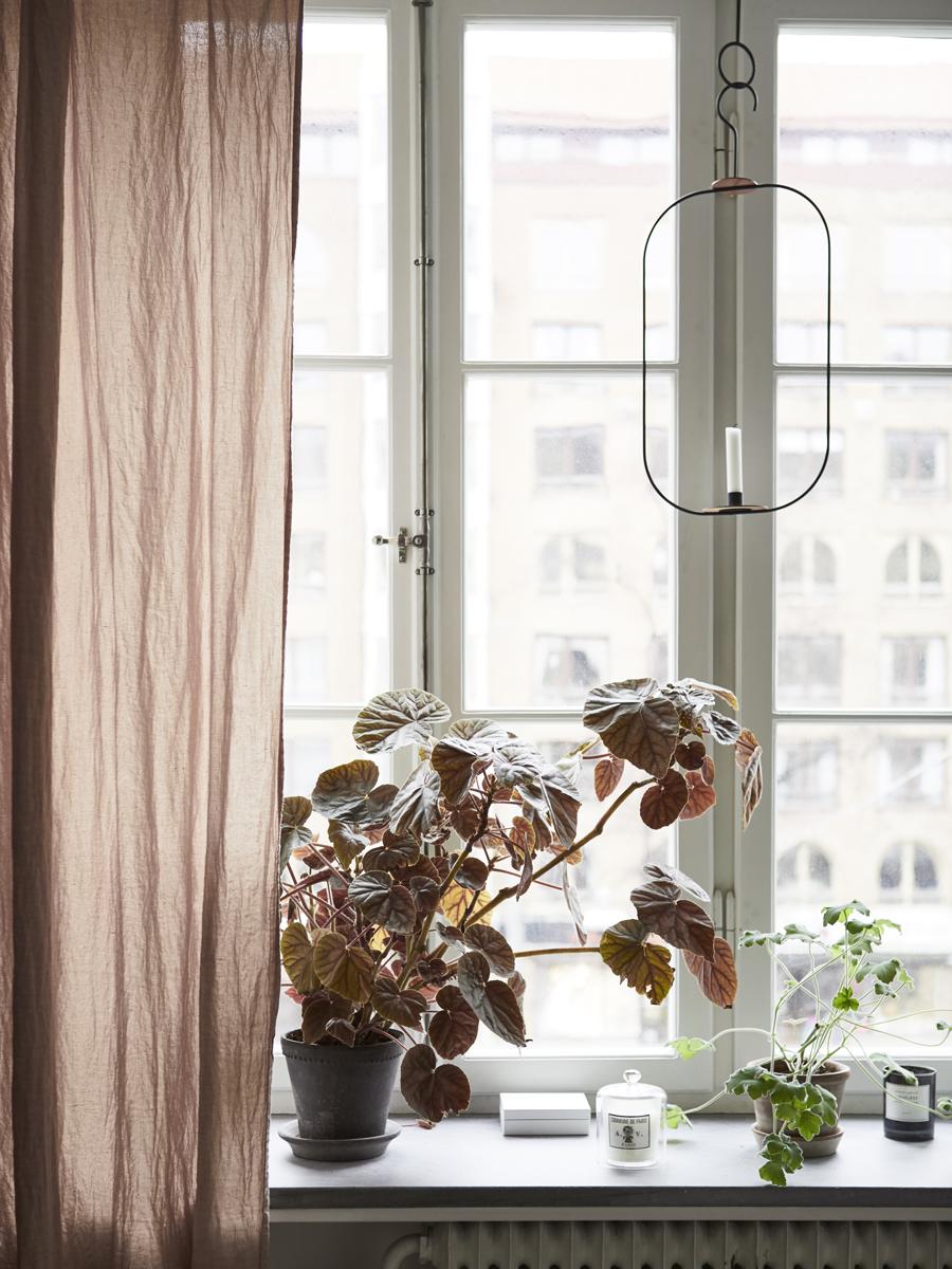 fönster med rosa gardin och kruka med palettblad