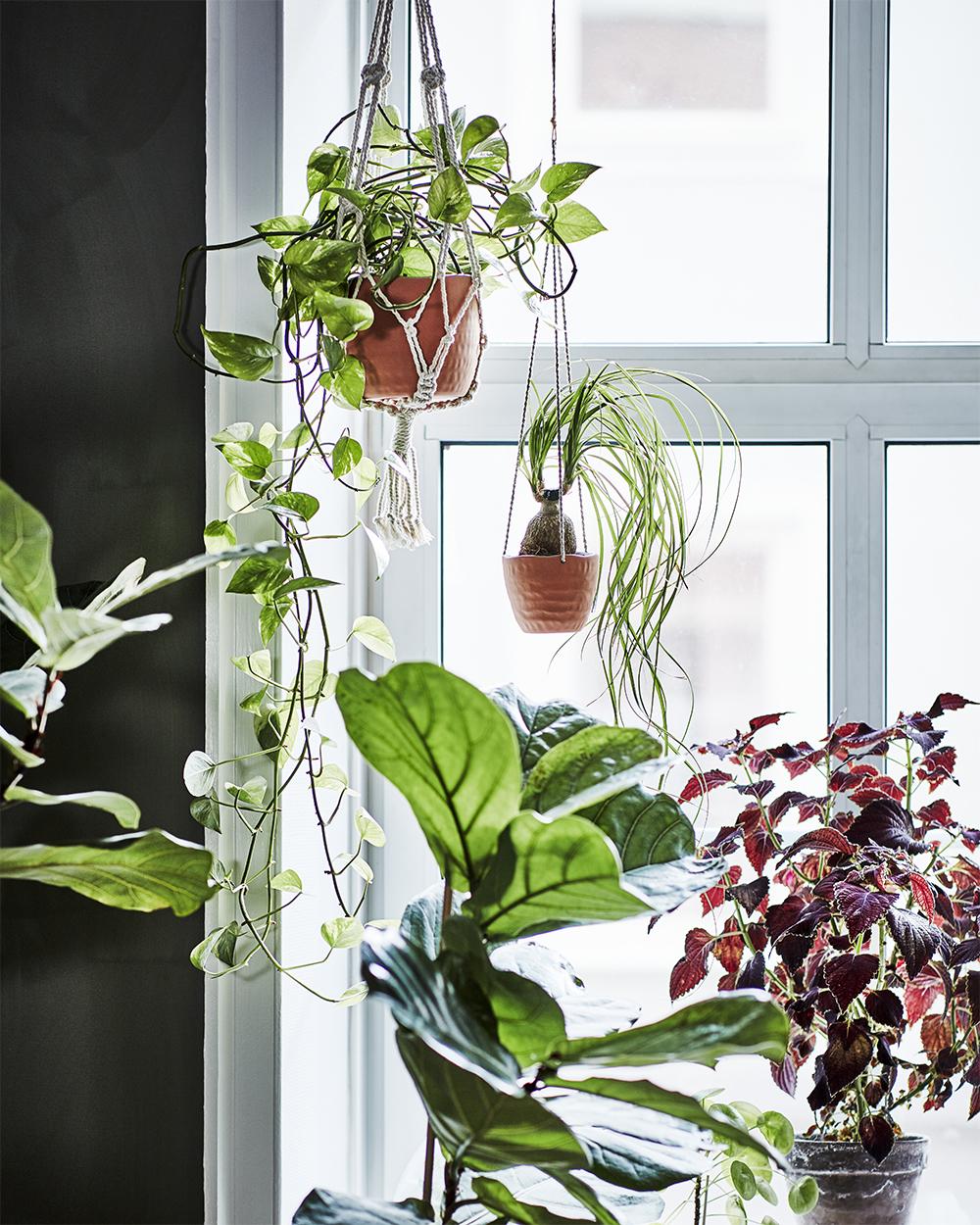 amplar och krukor från ikeas kollektion botanisk