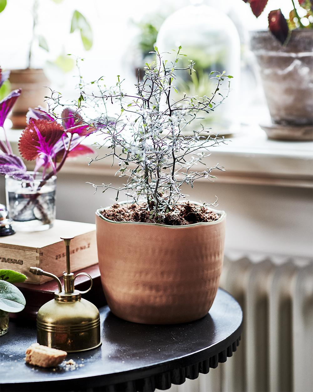 Handgjord kruka i rödlera från Ikeas kollektion Botanisk