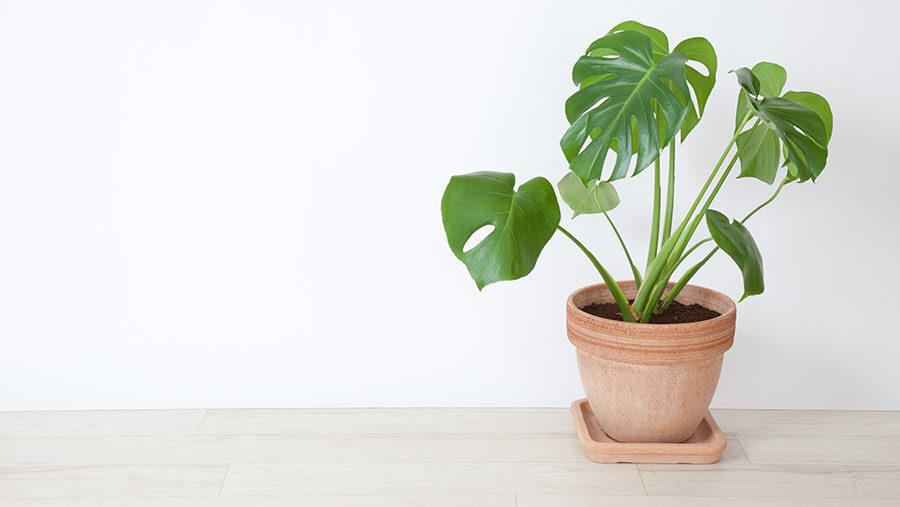 växter som tål direkt solljus