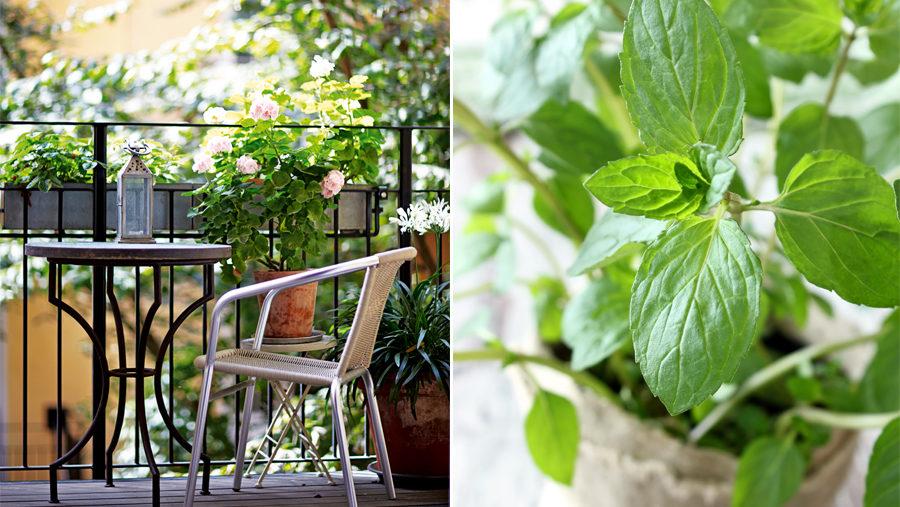 5 bästa växterna att odla på balkongen