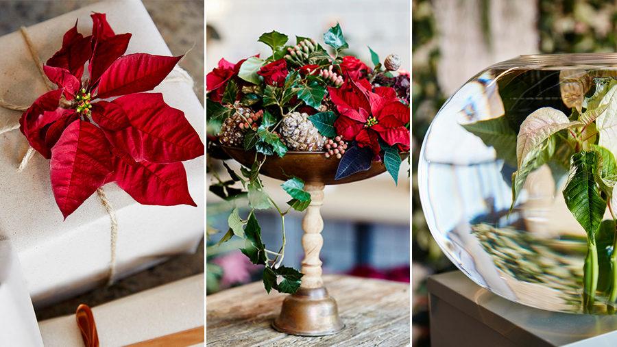5 nya sätt att dekorera med julstjärna