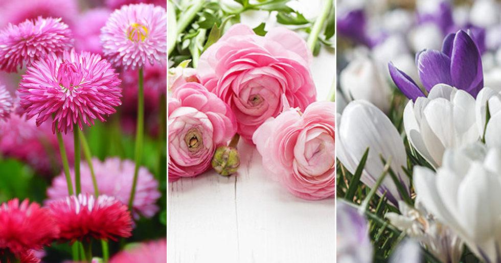 7 fina blommor du kan plantera på balkongen redan nu
