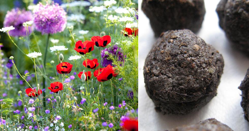 Så skapar du en vacker sommaräng – med trendiga fröbomber