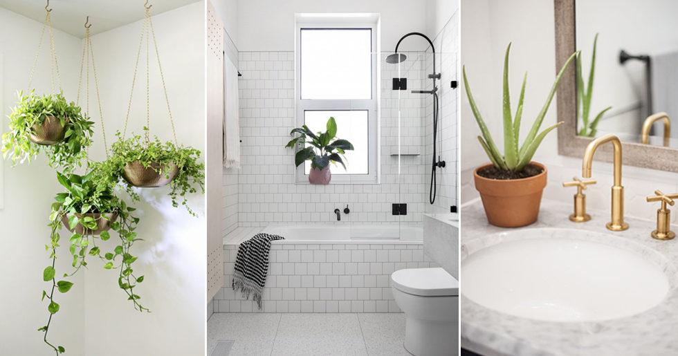 Så inreder du med växter i badrummet – 7 snygga tips e2a06583233b2