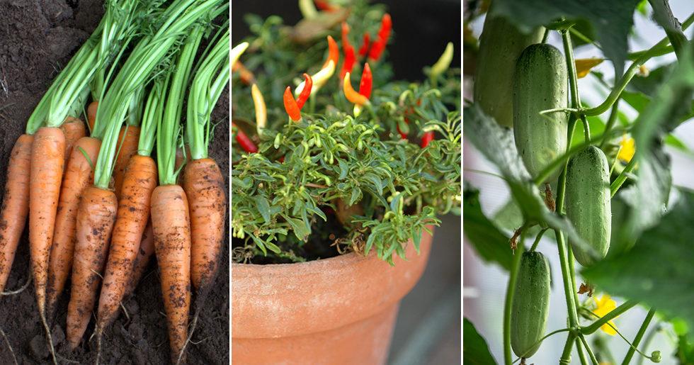 6 enkla grönsaker att odla på balkongen