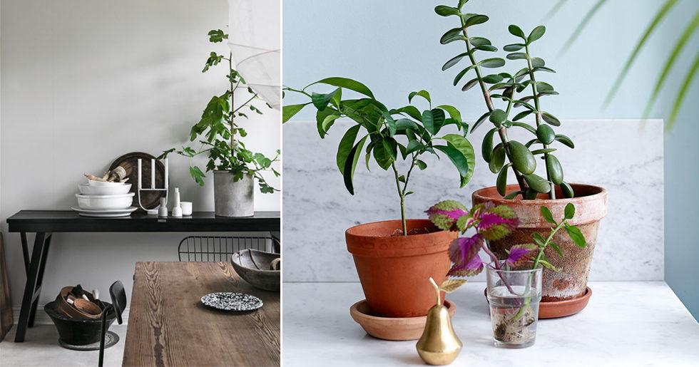 Experten: Så tar du hand om dina vinterdeppiga växter