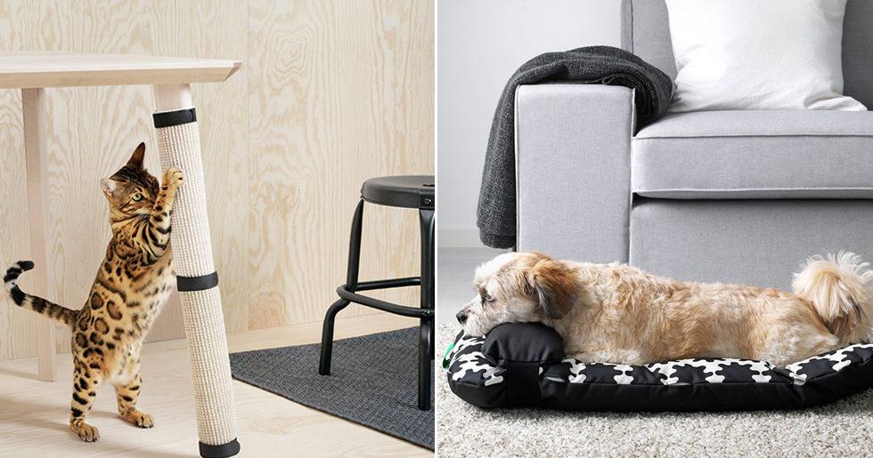 Ikea lanserar stilren kollektion – för hunden och katten
