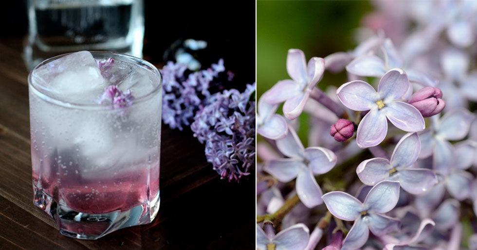 Bästa Gin & Tonic just nu – smaksatt med syren
