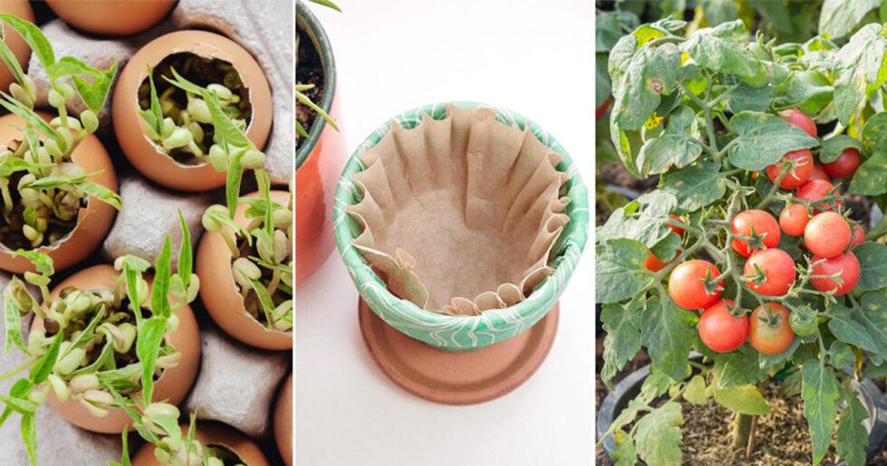 Splitter nya Lyckas odla hemma – billigt och enkelt | ELLE Decoration RL-85