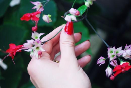 fjärilshuset blomma
