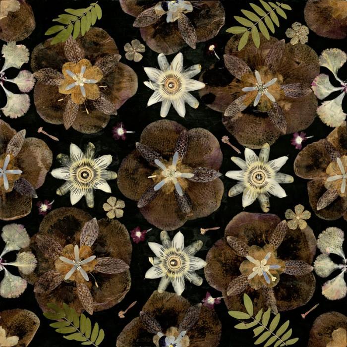 Herbarium, Gunilla Lagerhem Ullberg