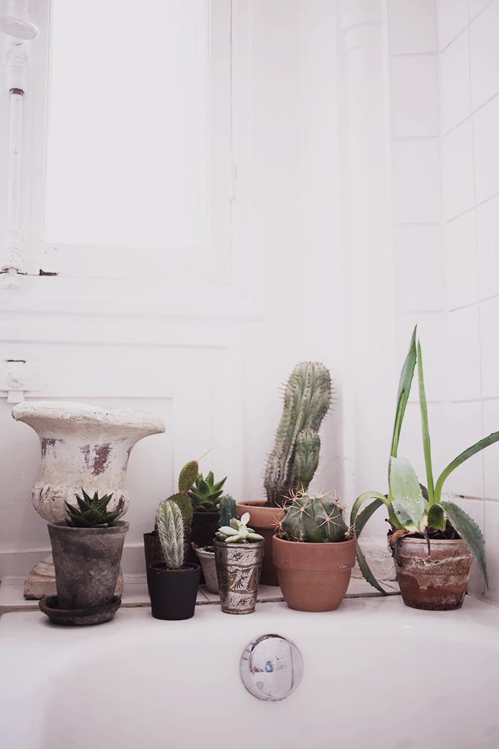 lördagsdetaljer - kaktusar