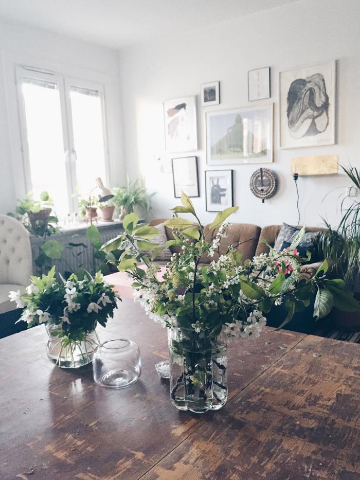 plocka-blommor-vitsippor-hagg-korsbar