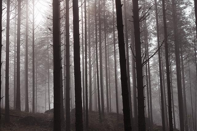 hejregina träden liten
