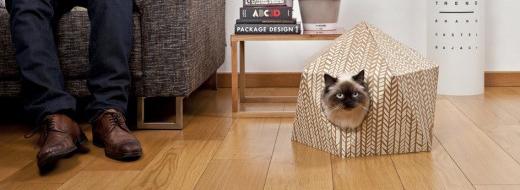 The Cat Cube