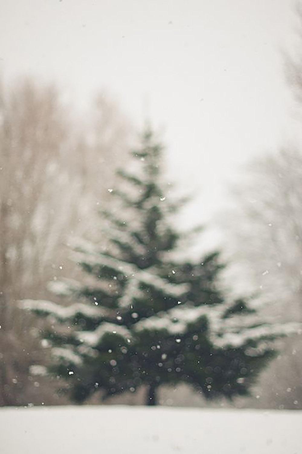 Suddig julgran
