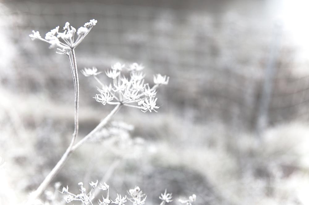 Veckans stilleben vintervitt 2