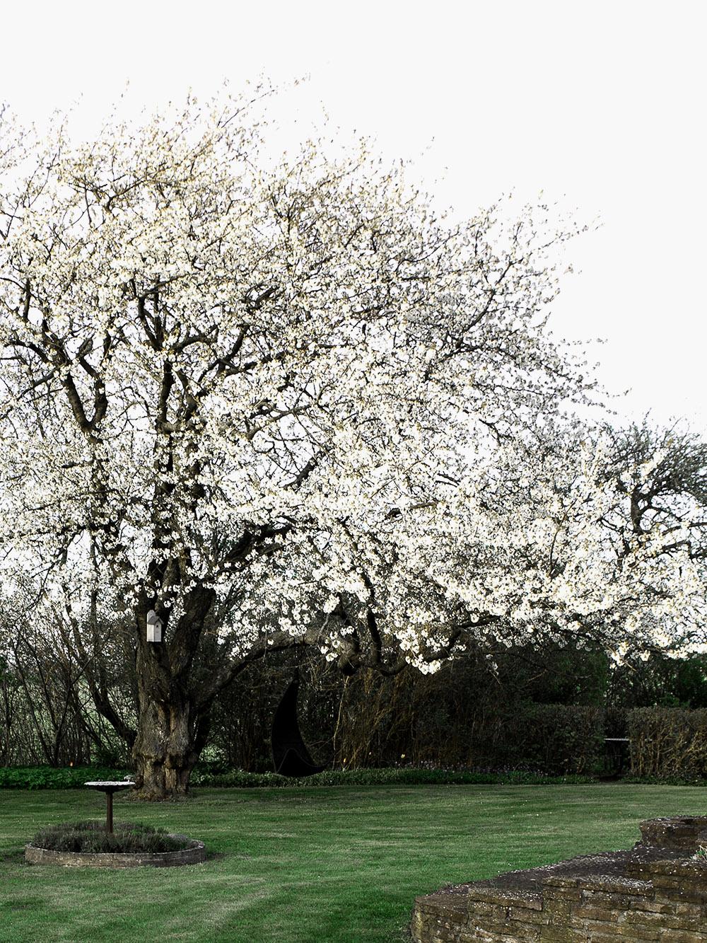 DW_Exterior_spring_garden