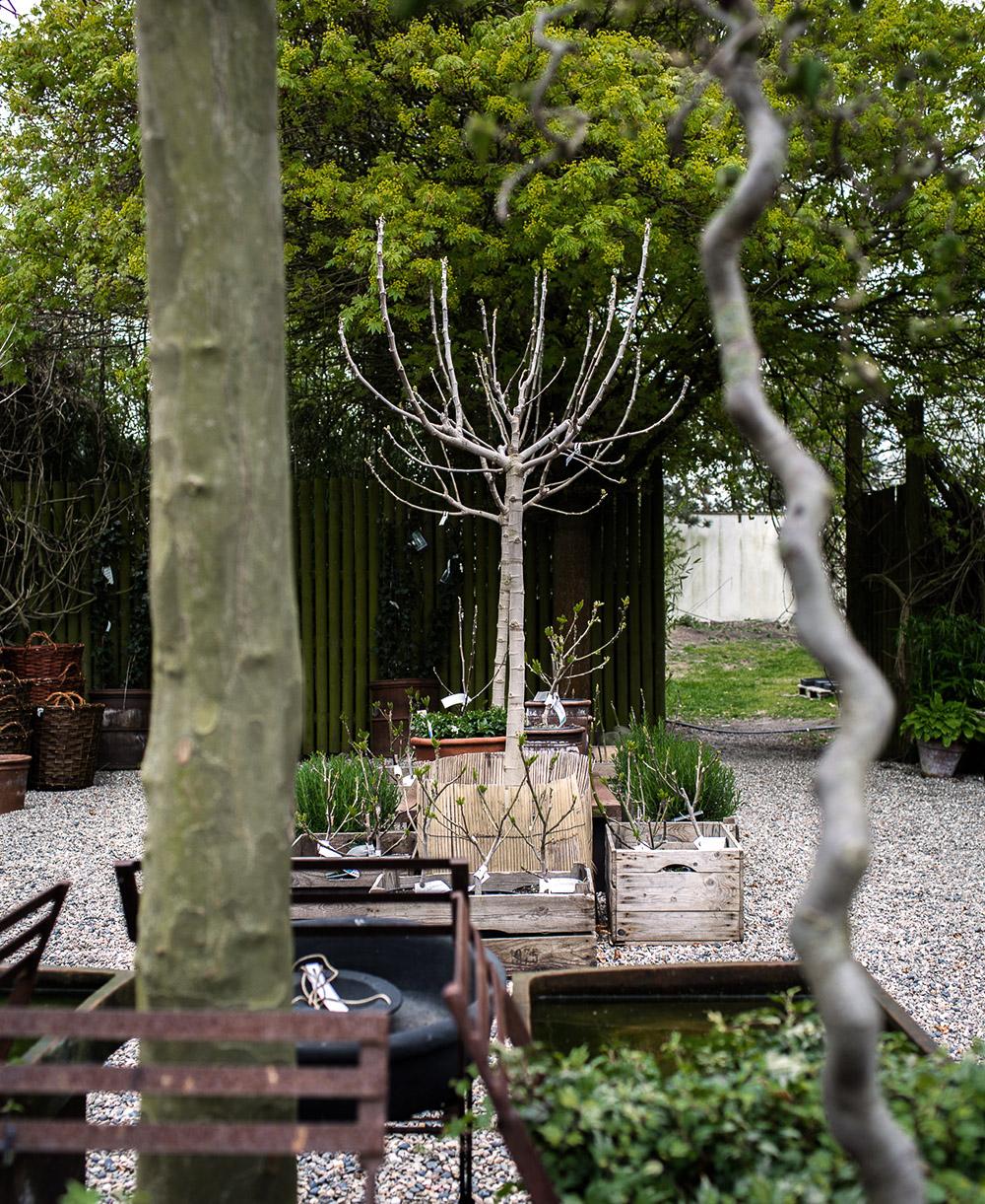 Daniella´s trädgård | Bästa plantskolan 3