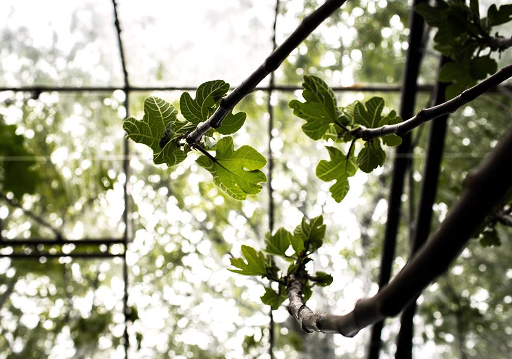 Daniella´s trädgård | Bästa plantskolan 7