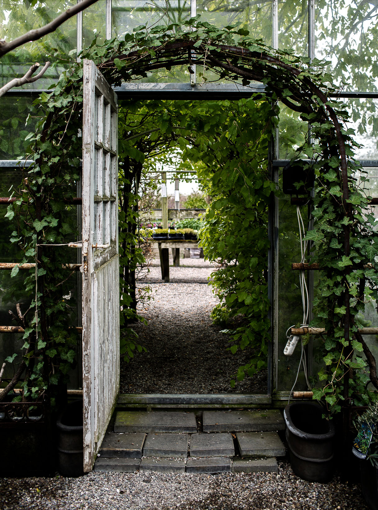 Daniella´s trädgård | Bästa plantskolan 9