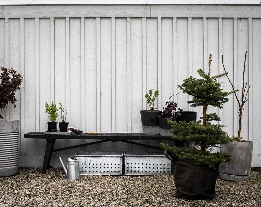 Daniella´s trädgård -omplantering i kruka