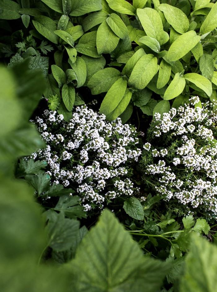 Daniella´s trädgård | Kryddor i landet