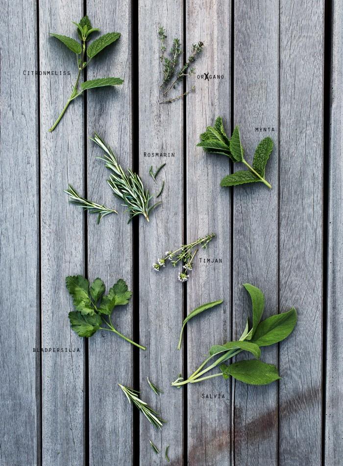 Daniella´s trädgård | Kryddor ny