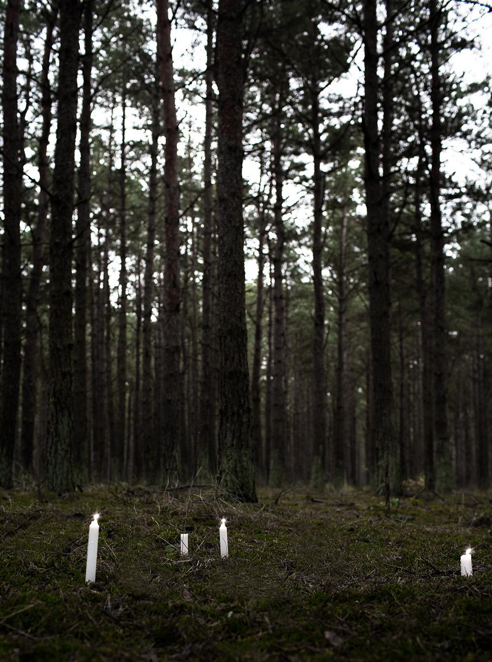 1 DW_skogsljus