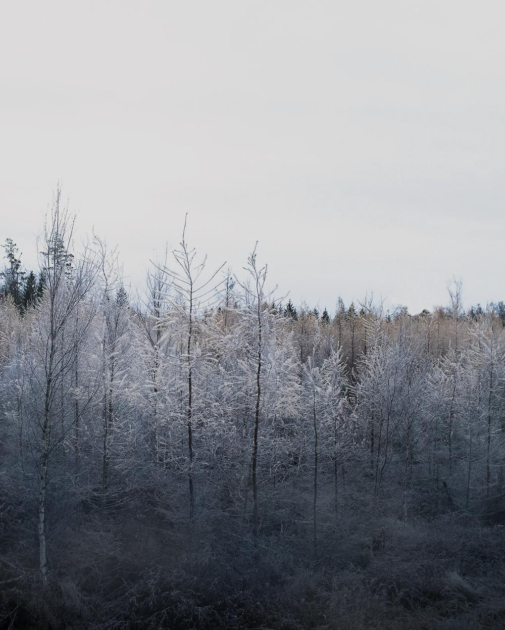 Veckans bild Rimfrost