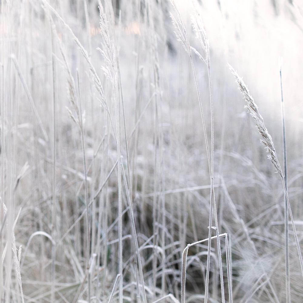 2 Vinterdag