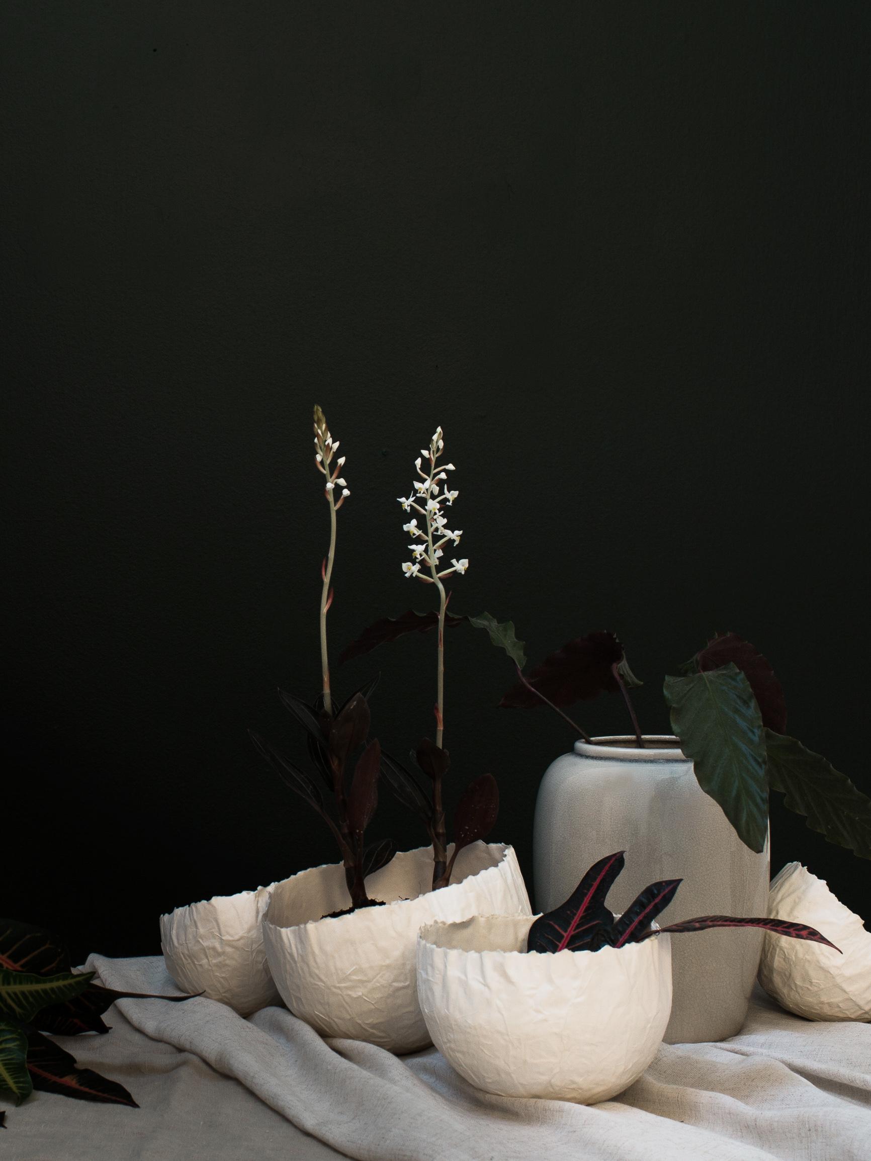 Några sköna gröna | Daniella Witte