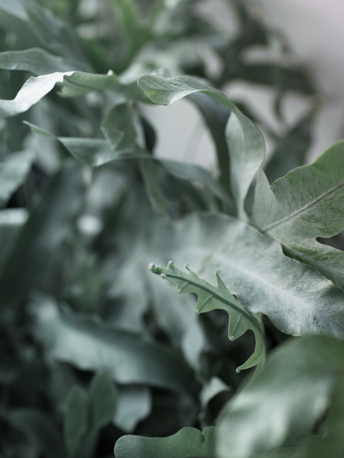 3 DW_spirande grönt