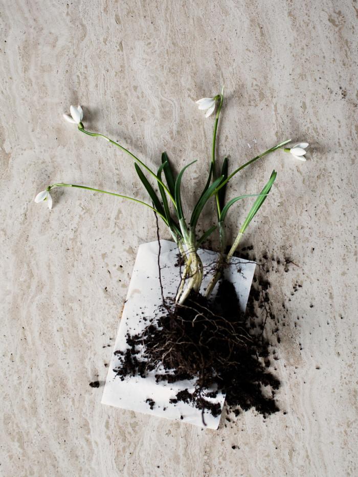5 Daniella Witte_Spring sign_snowdropps