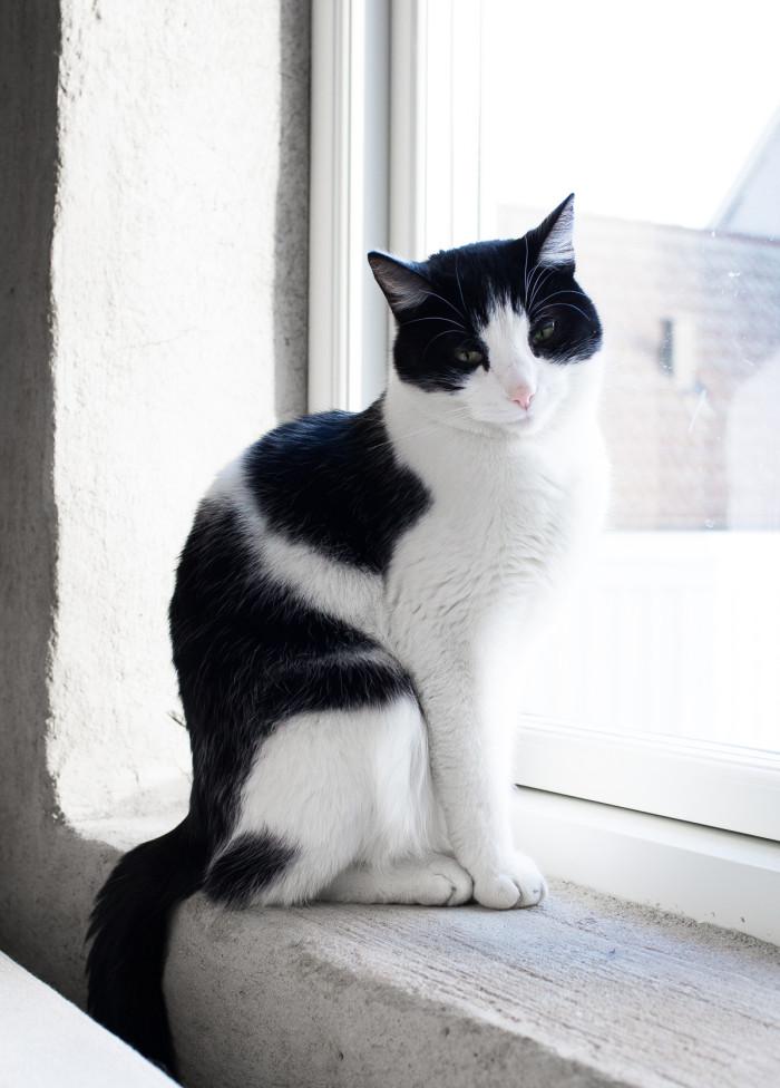 DW_favoritsoffan_katten