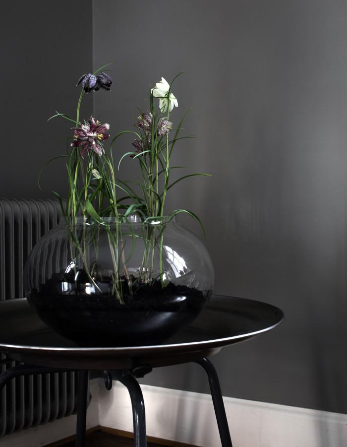 plantering i glasvas_kungslilja