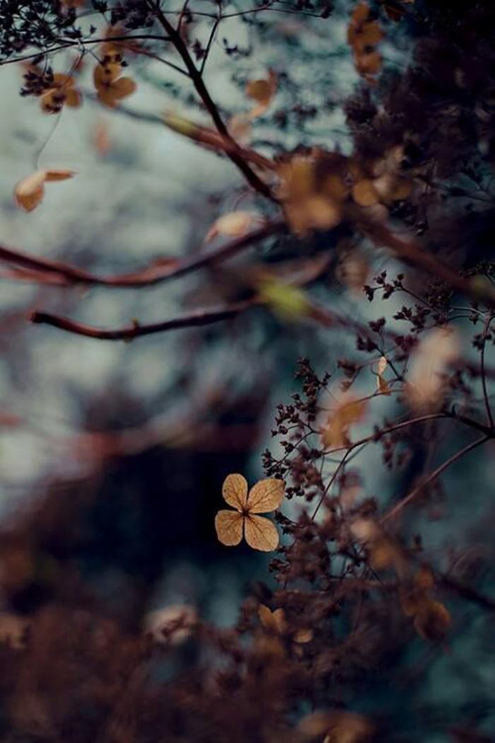 Höstens blickfång